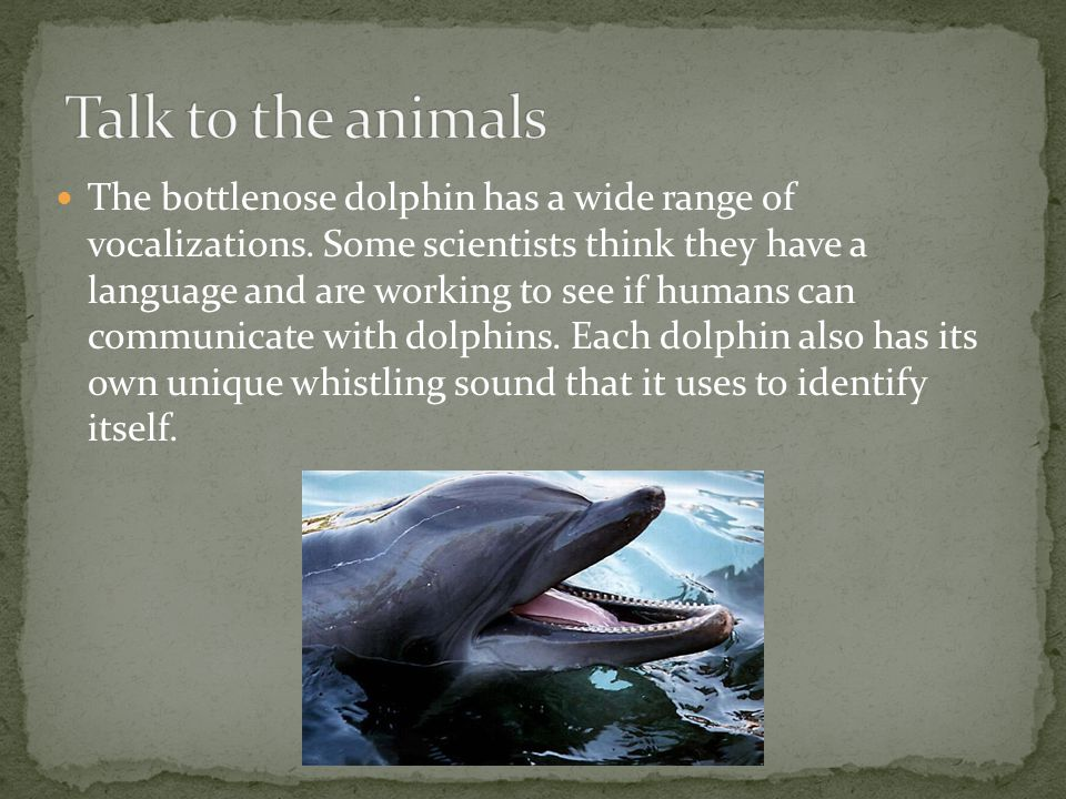 The bottlenose dolphin has a wide range of vocalizations.