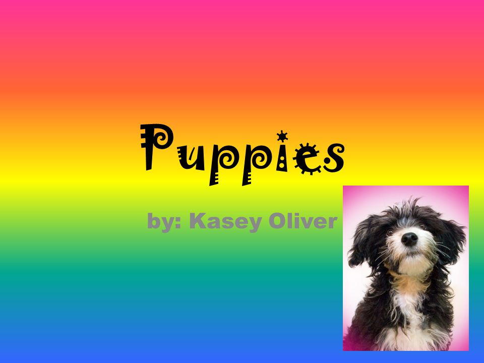 Puppies by: Kasey Oliver