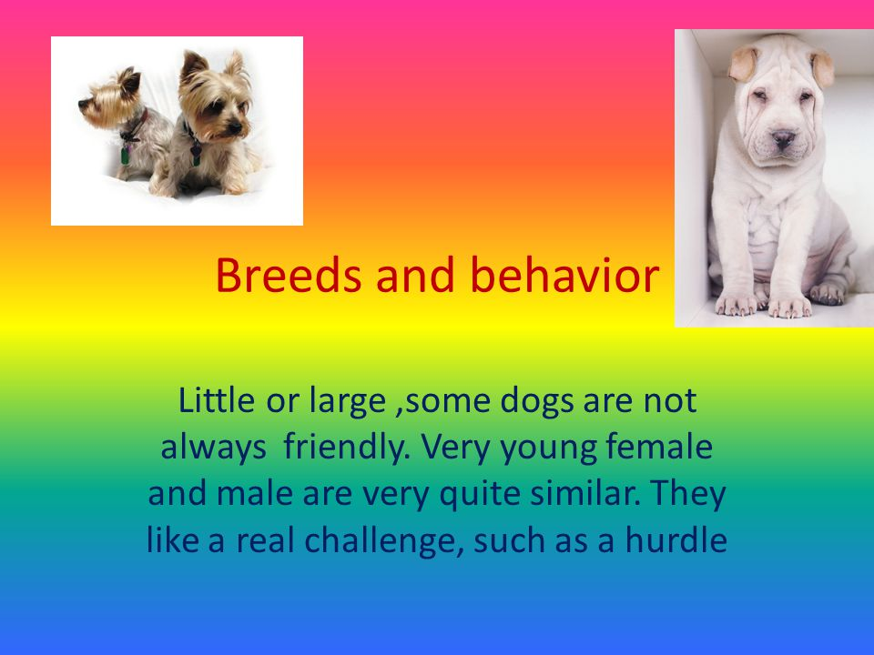 Breeds and behavior Little or large,some dogs are not always friendly.