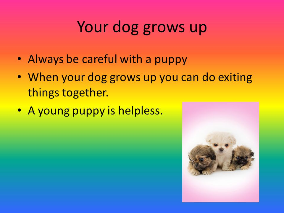 Your dog grows up Always be careful with a puppy When your dog grows up you can do exiting things together.