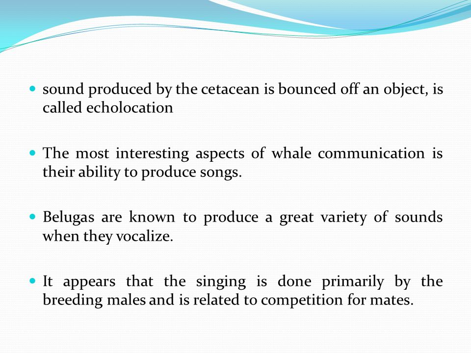 sound produced by the cetacean is bounced off an object, is called echolocation The most interesting aspects of whale communication is their ability to produce songs.