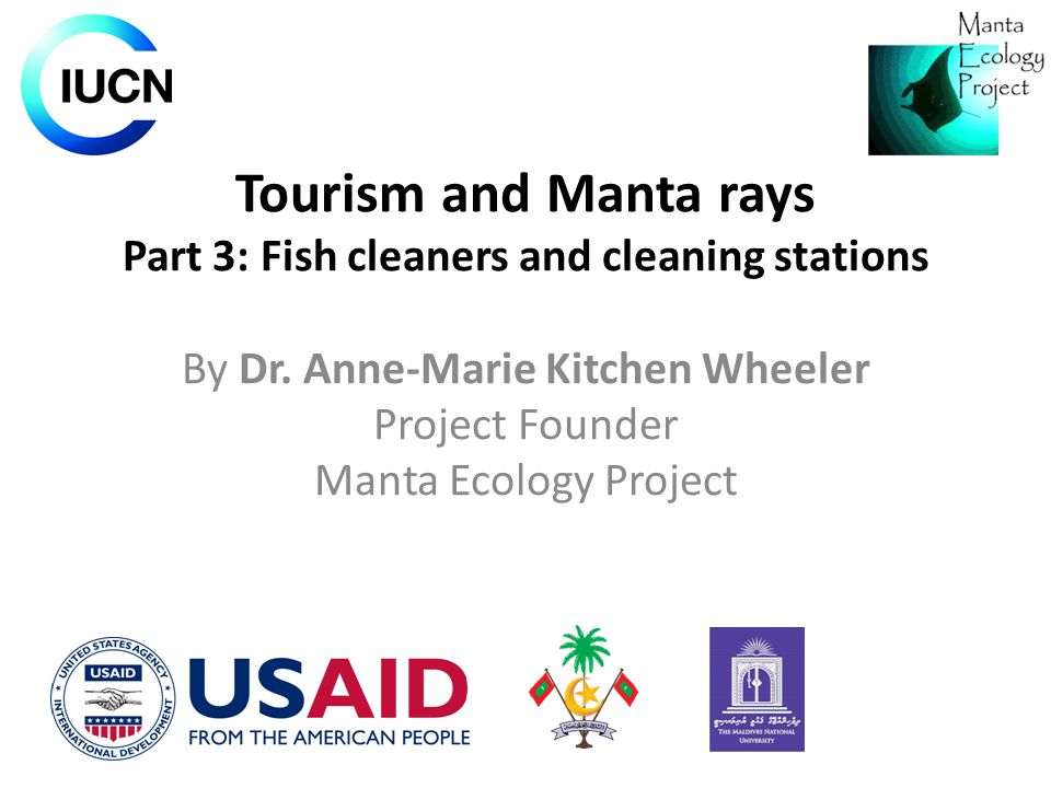 Tourism and Manta rays Part 3: Fish cleaners and cleaning stations By Dr. Anne-Marie Kitchen Wheeler Project Founder Manta Ecology Project
