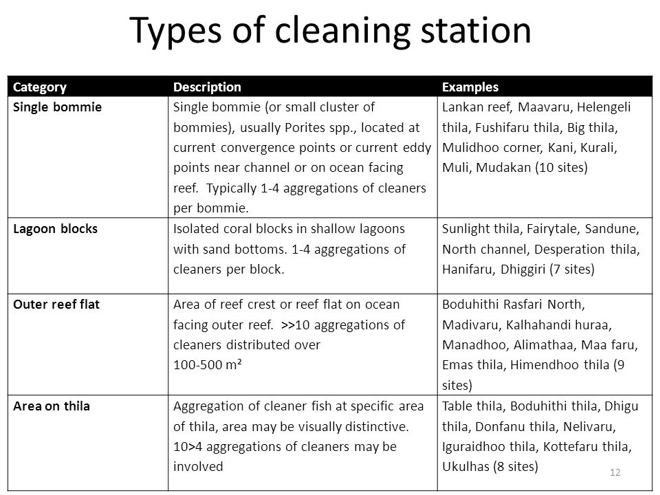 Types of cleaning station 12 CategoryDescriptionExamples Single bommie Single bommie (or small cluster of bommies), usually Porites spp., located at current convergence points or current eddy points near channel or on ocean facing reef.