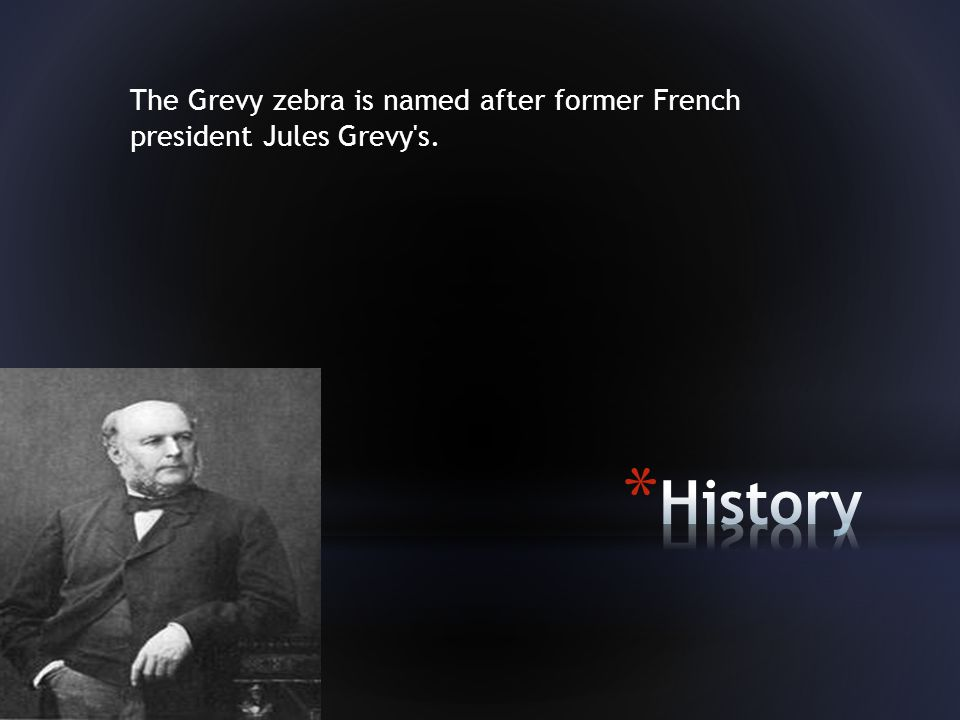 The Grevy zebra is named after former French president Jules Grevy s.