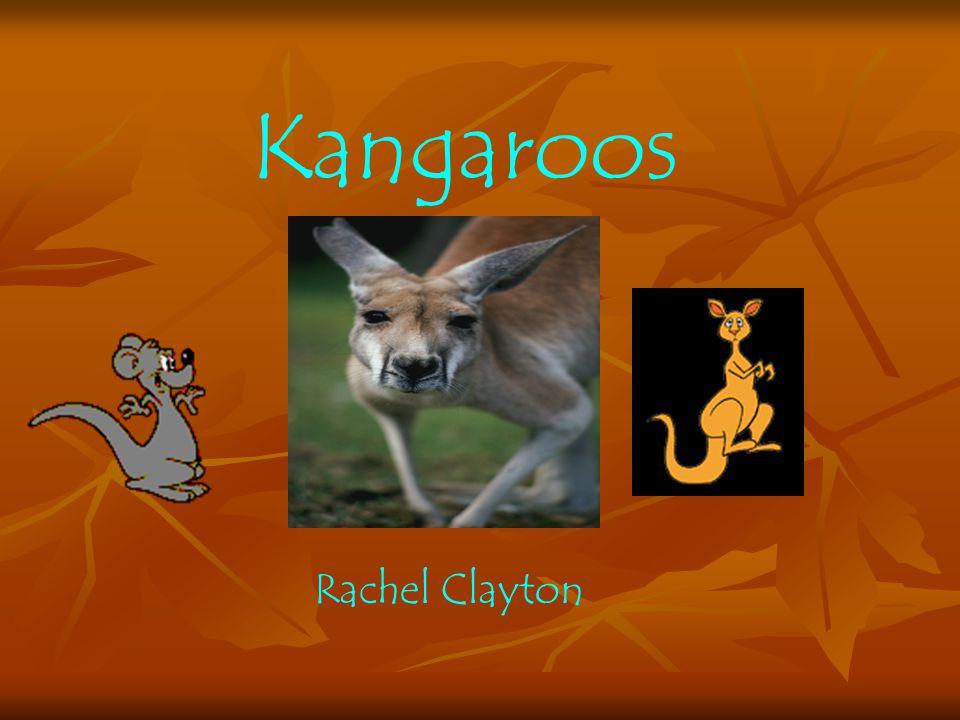 Kangaroos Rachel Clayton