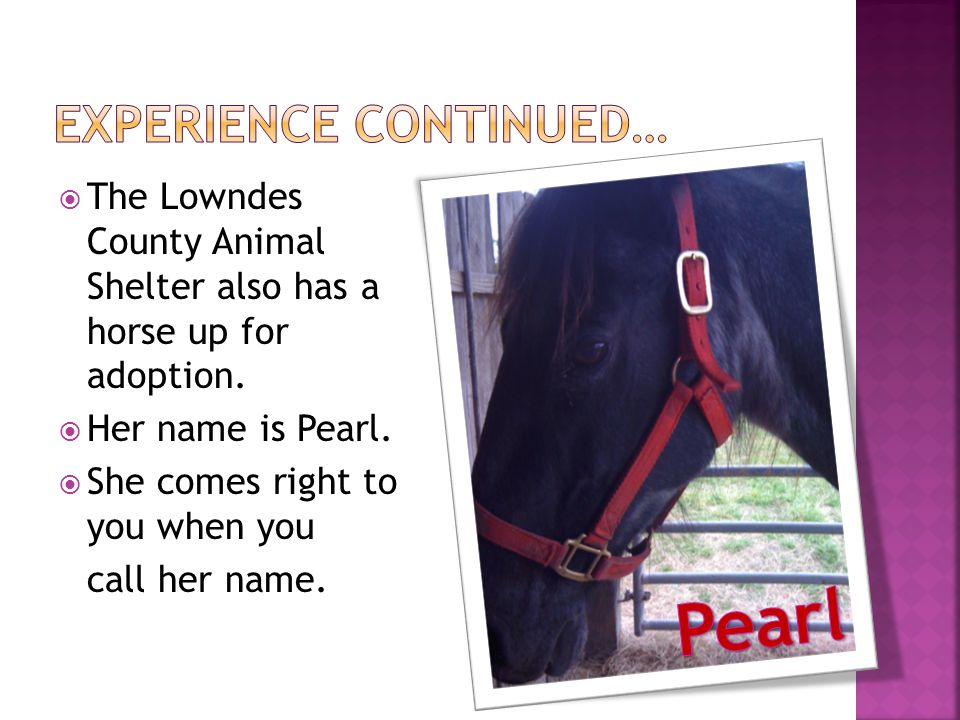  The Lowndes County Animal Shelter also has a horse up for adoption.