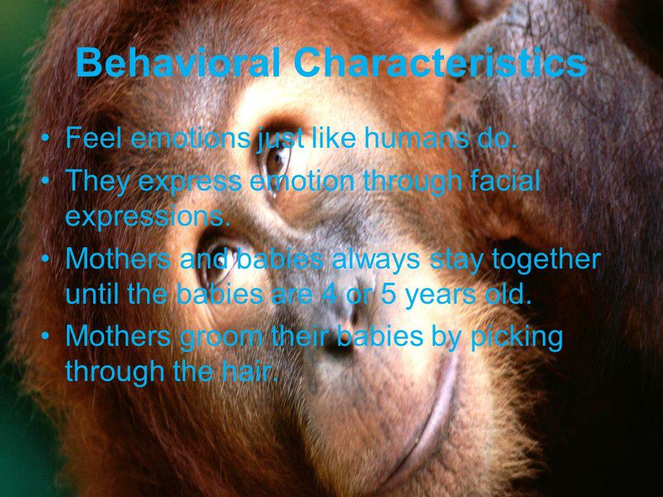 Behavioral Characteristics Feel emotions just like humans do.
