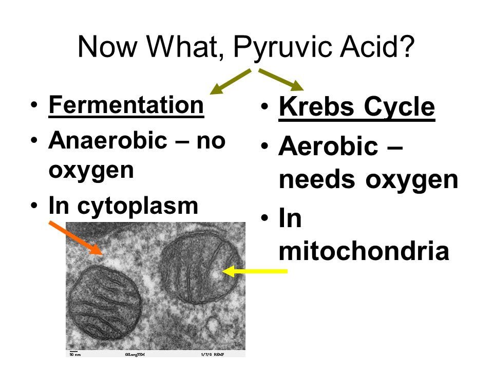 Now What, Pyruvic Acid.