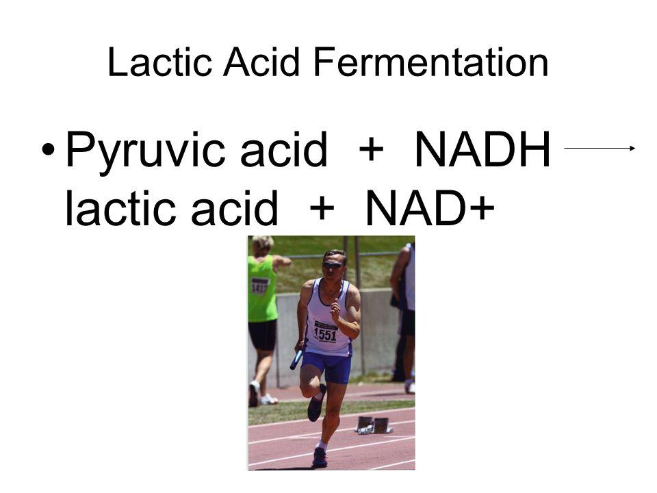 Lactic Acid Fermentation Pyruvic acid + NADH lactic acid + NAD+