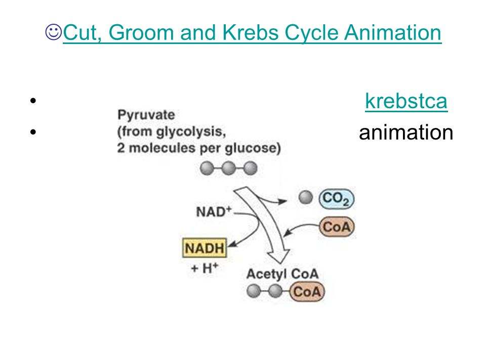 Cut, Groom and Krebs Cycle Animation krebstca animation