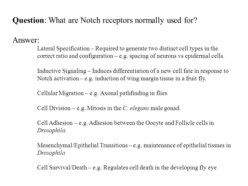 Question: What are Notch receptors normally used for.