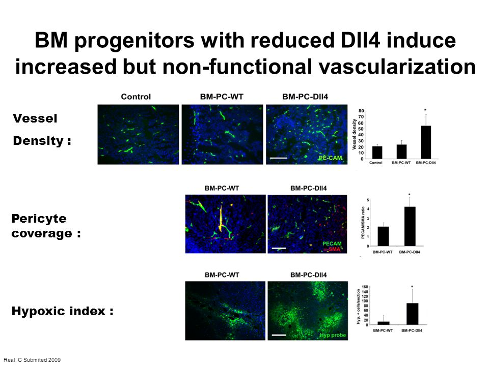 Vessel Density : Pericyte coverage : Hypoxic index : BM progenitors with reduced Dll4 induce increased but non-functional vascularization Real, C Subm