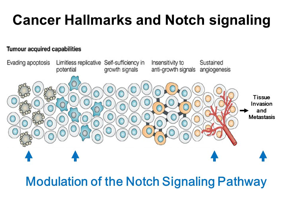 Cancer Hallmarks and Notch signaling Tissue Invasion and Metastasis Modulation of the Notch Signaling Pathway