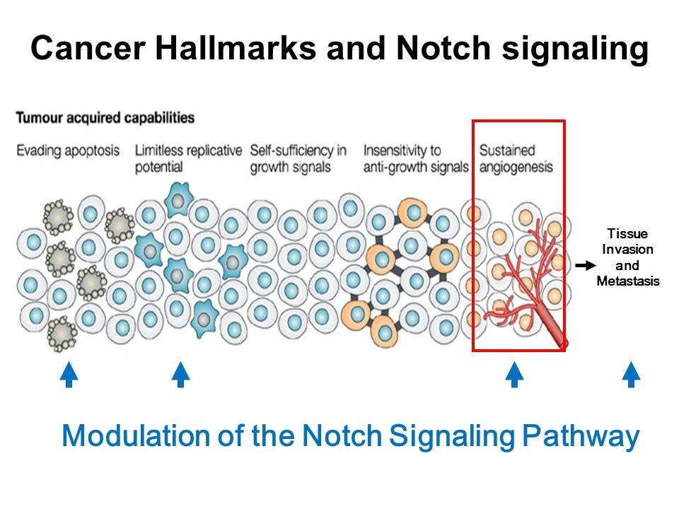 Tumor Angiogenesis Hashizume, H.l NCR 2000 Pro-angiogenic factors: VEGF, FGF, Neuropillin, Ang-2, MMPs… Vessel stabilizing factors: Notch-Delta, PDGF- 1, Ang-1, ECMs…