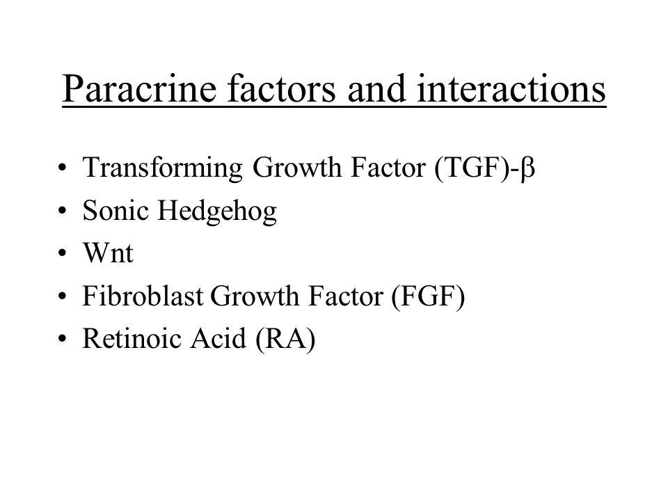 Paracrine factors and interactions Transforming Growth Factor (TGF)-  Sonic Hedgehog Wnt Fibroblast Growth Factor (FGF) Retinoic Acid (RA)