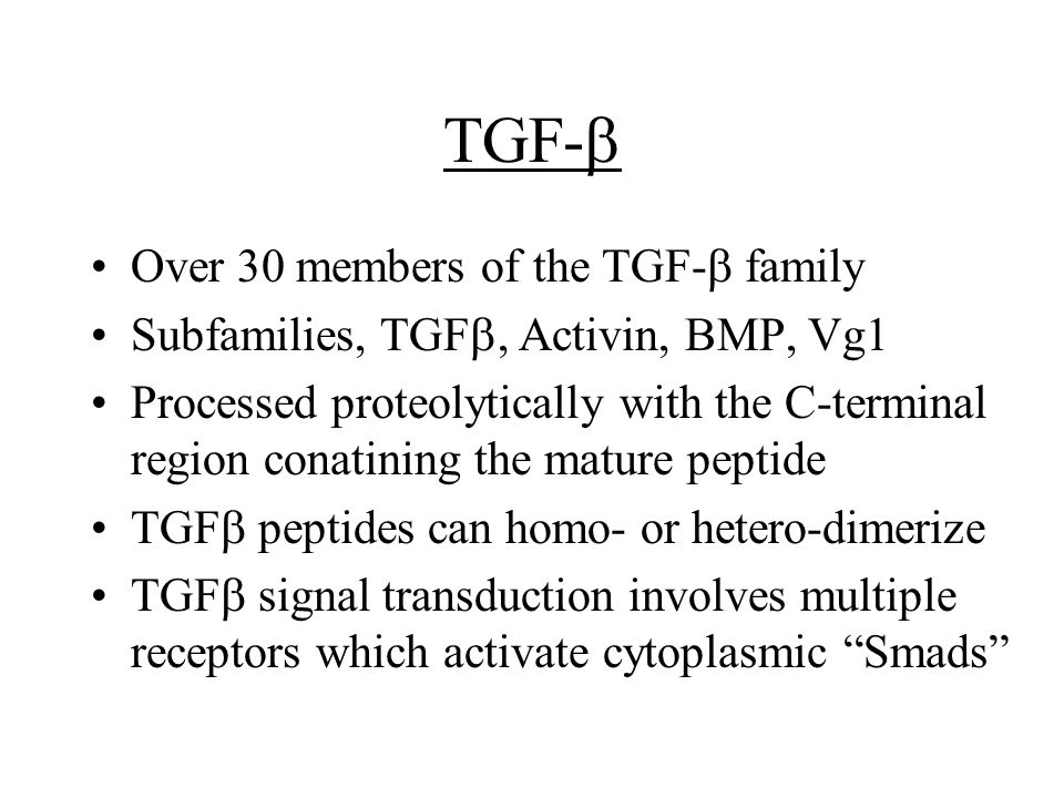 TGF-  Over 30 members of the TGF-  family Subfamilies, TGF , Activin, BMP, Vg1 Processed proteolytically with the C-terminal region conatining the mature peptide TGF  peptides can homo- or hetero-dimerize TGF  signal transduction involves multiple receptors which activate cytoplasmic Smads