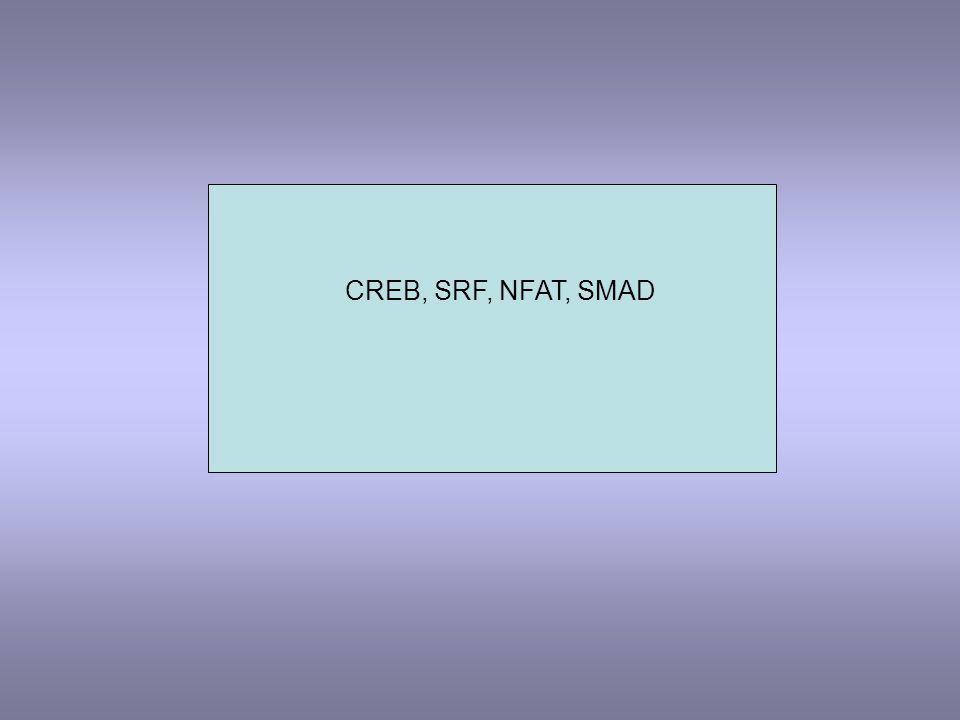 CREB, SRF, NFAT, SMAD