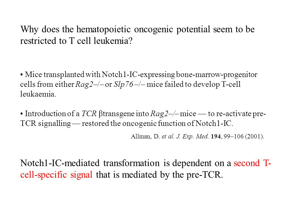 Why does the hematopoietic oncogenic potential seem to be restricted to T cell leukemia.