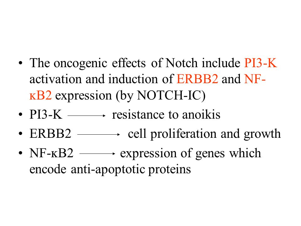 The oncogenic effects of Notch include PI3-K activation and induction of ERBB2 and NF- ĸB2 expression (by NOTCH-IC) PI3-K resistance to anoikis ERBB2 cell proliferation and growth NF-ĸB2 expression of genes which encode anti-apoptotic proteins