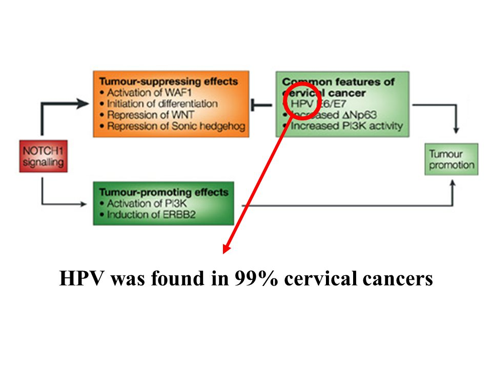 HPV was found in 99% cervical cancers