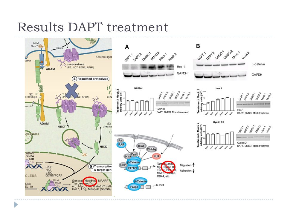 Results DAPT treatment