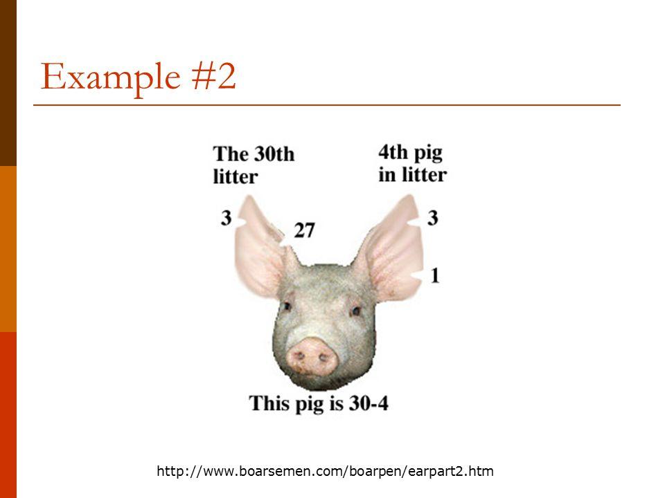 Example #2 http://www.boarsemen.com/boarpen/earpart2.htm