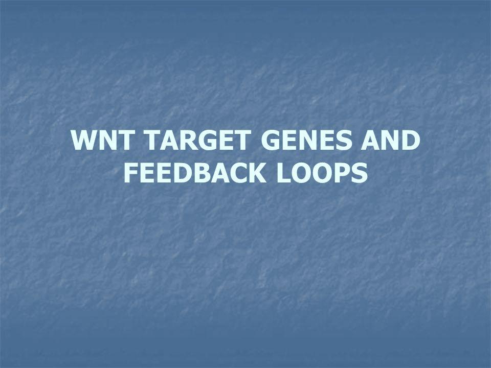 WNT TARGET GENES AND FEEDBACK LOOPS