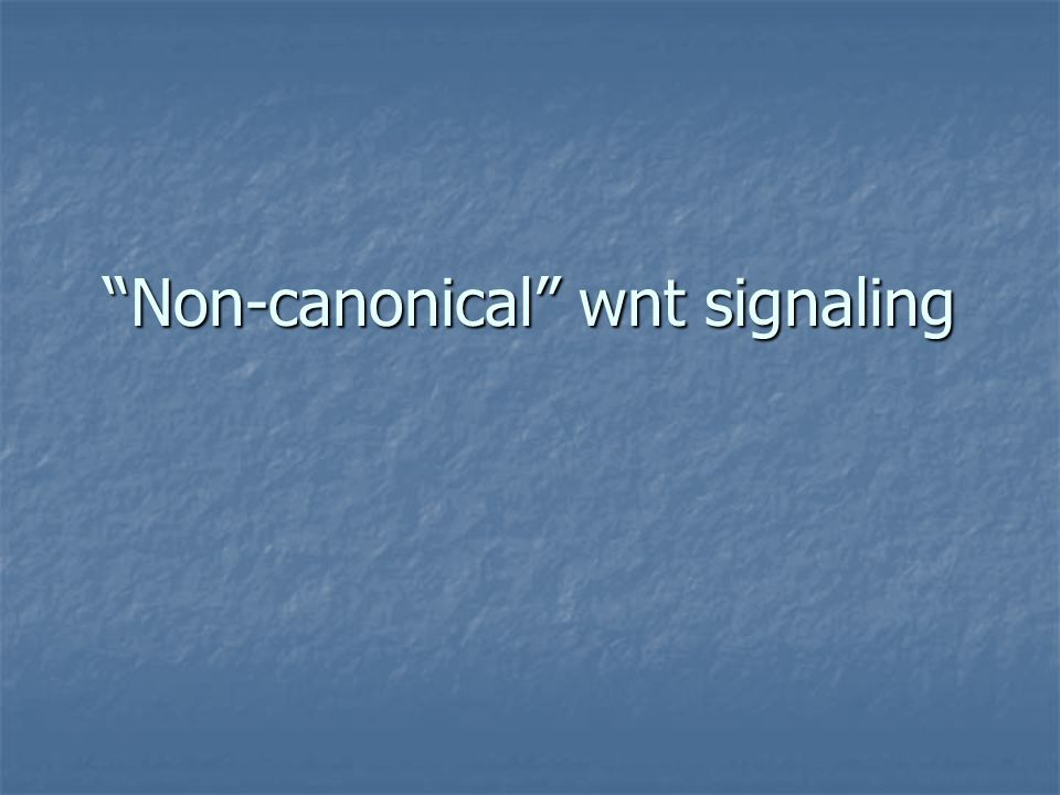 Non-canonical wnt signaling