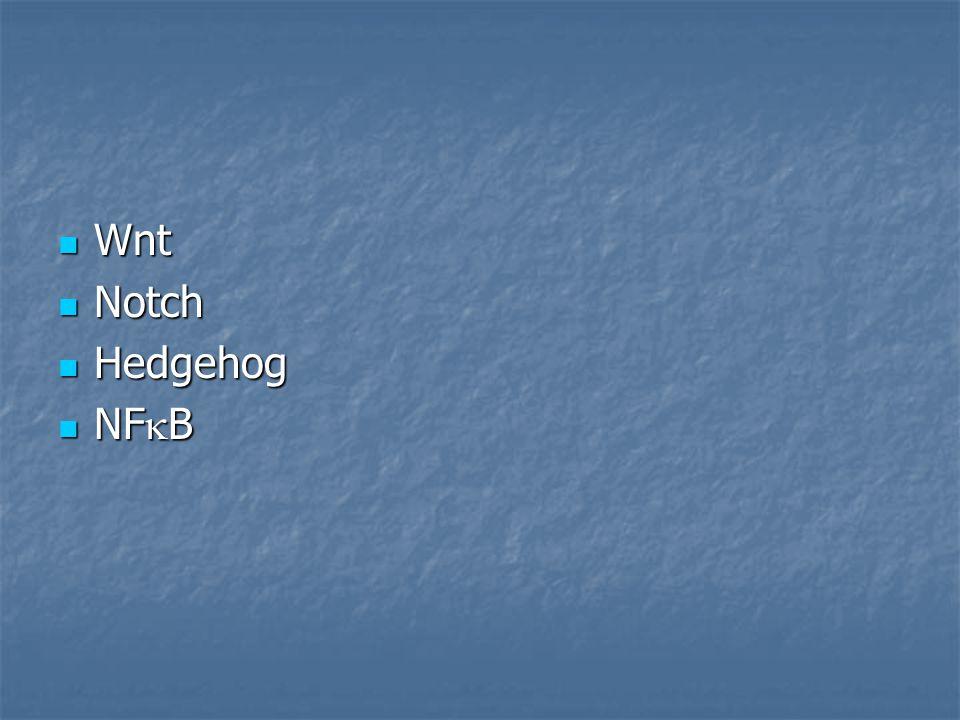 Wnt Wnt Notch Notch Hedgehog Hedgehog NF  B NF  B