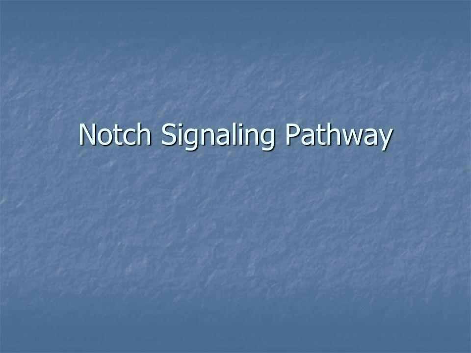 Notch Signaling Pathway
