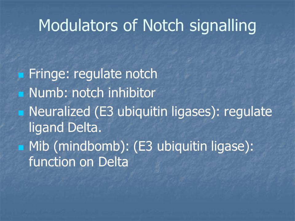 Modulators of Notch signalling Fringe: regulate notch Numb: notch inhibitor Neuralized (E3 ubiquitin ligases): regulate ligand Delta.
