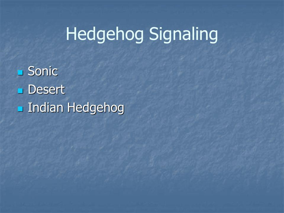 Hedgehog Signaling Sonic Sonic Desert Desert Indian Hedgehog Indian Hedgehog