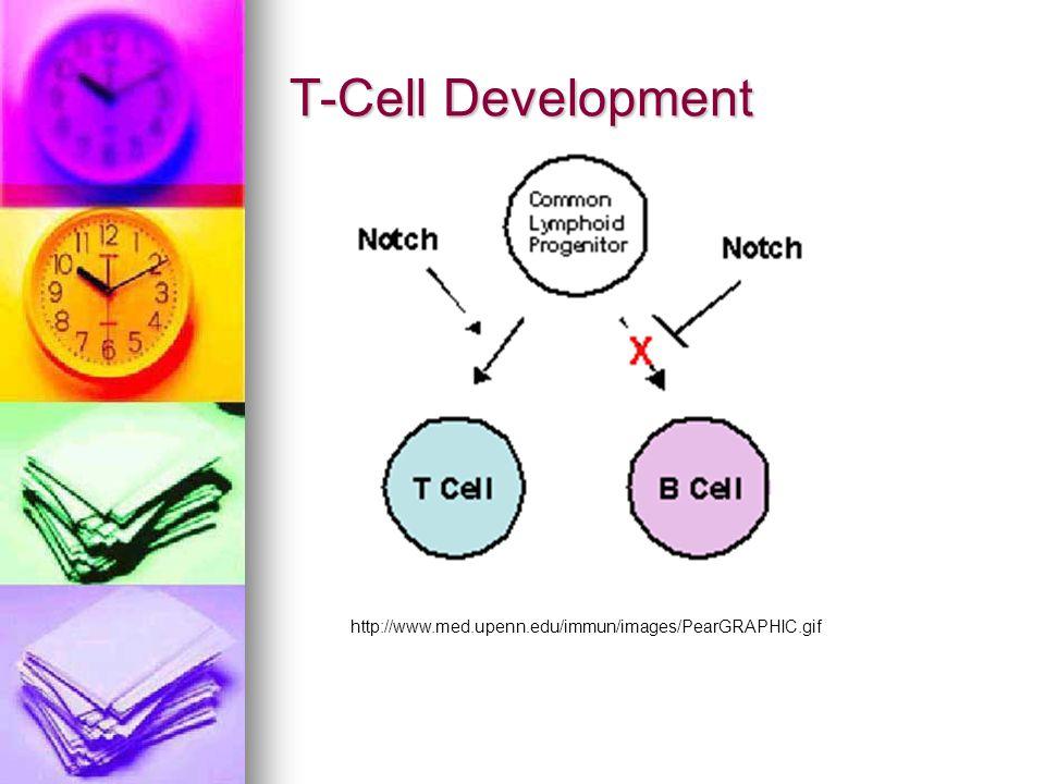 T-Cell Development http://www.med.upenn.edu/immun/images/PearGRAPHIC.gif