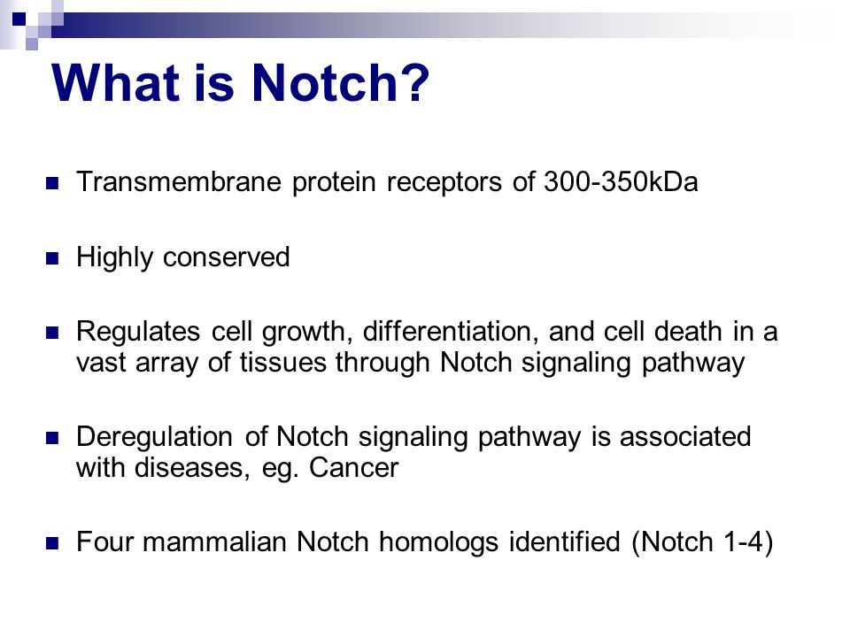 What is Notch.
