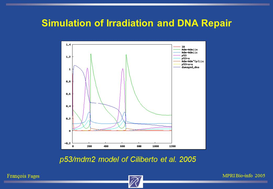 François Fages MPRI Bio-info 2005 Simulation of Irradiation and DNA Repair p53/mdm2 model of Ciliberto et al. 2005