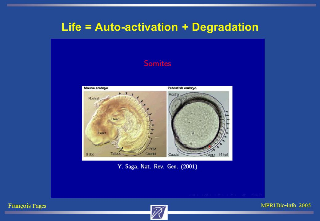François Fages MPRI Bio-info 2005 Life = Auto-activation + Degradation