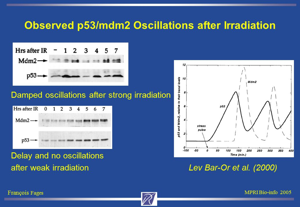 François Fages MPRI Bio-info 2005 Observed p53/mdm2 Oscillations after Irradiation Damped oscillations after strong irradiation Delay and no oscillati