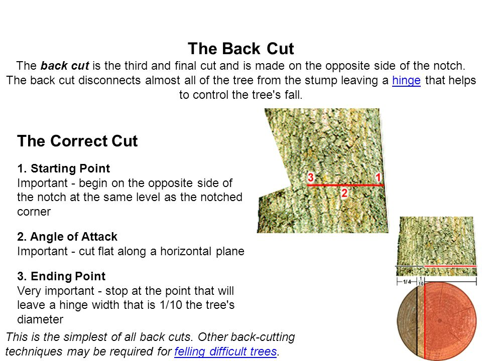 The Back Cut The back cut is the third and final cut and is made on the opposite side of the notch. The back cut disconnects almost all of the tree fr