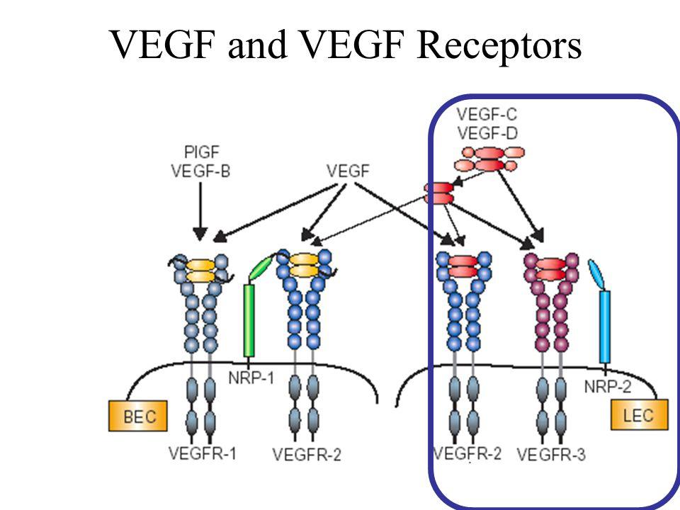 VEGF and VEGF Receptors