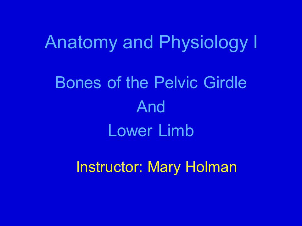 Anatomy and Physiology I Bones of the Pelvic Girdle And Lower Limb Instructor: Mary Holman