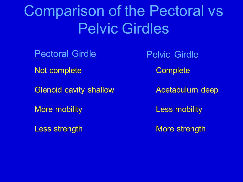 Comparison of the Pectoral vs Pelvic Girdles Pectoral Girdle Pelvic Girdle Not completeComplete Glenoid cavity shallowAcetabulum deep More mobilityLes