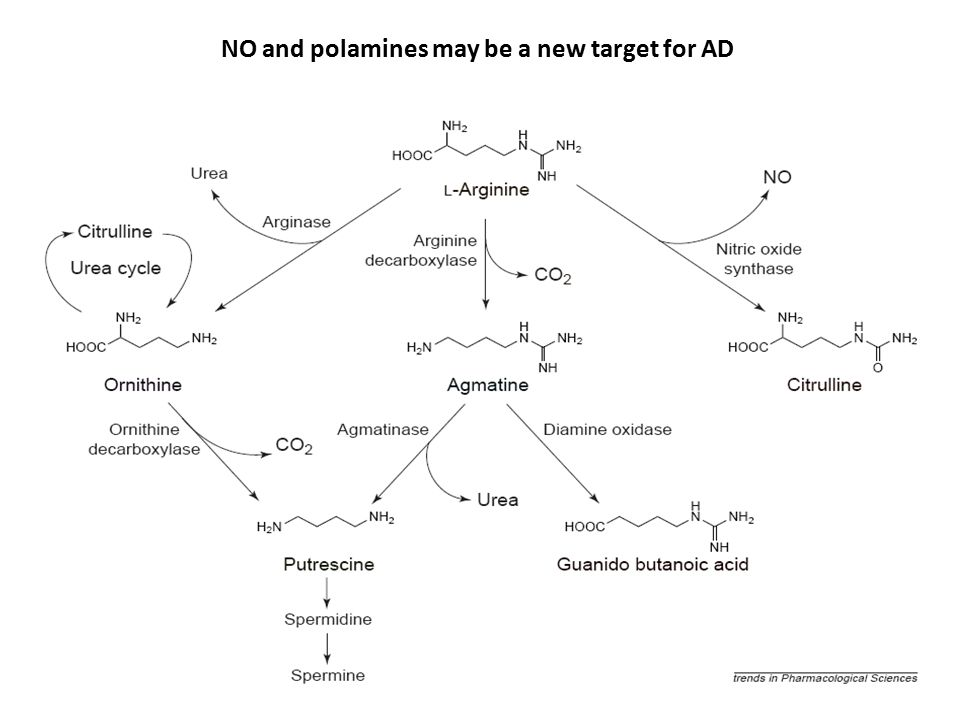 NO and polamines may be a new target for AD