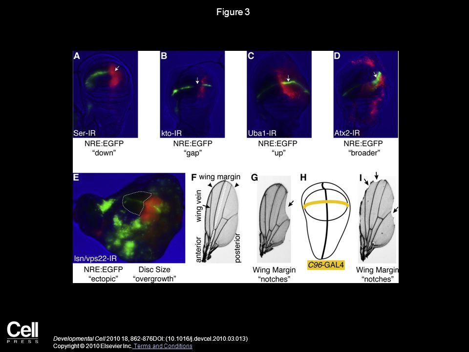 Figure 3 Developmental Cell 2010 18, 862-876DOI: (10.1016/j.devcel.2010.03.013) Copyright © 2010 Elsevier Inc.