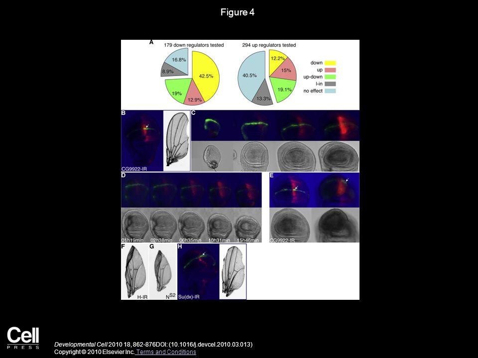 Figure 4 Developmental Cell 2010 18, 862-876DOI: (10.1016/j.devcel.2010.03.013) Copyright © 2010 Elsevier Inc.