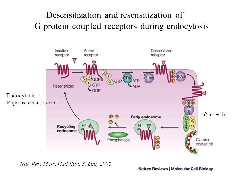 Desensitization and resensitization of G-protein-coupled receptors during endocytosis Nat. Rev. Mole. Cell Biol. 3, 600, 2002  -arrestin Endocytosis