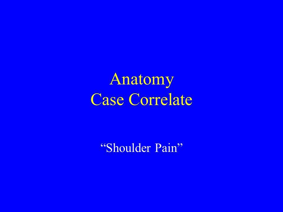 "Anatomy Case Correlate ""Shoulder Pain"""