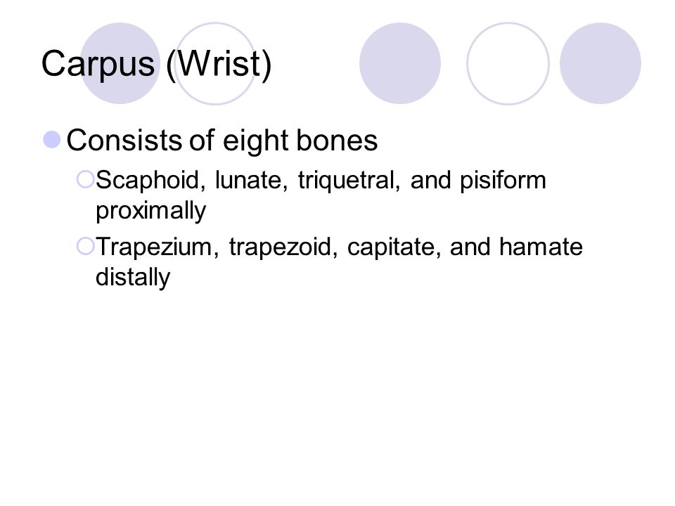Carpus (Wrist) Consists of eight bones  Scaphoid, lunate, triquetral, and pisiform proximally  Trapezium, trapezoid, capitate, and hamate distally