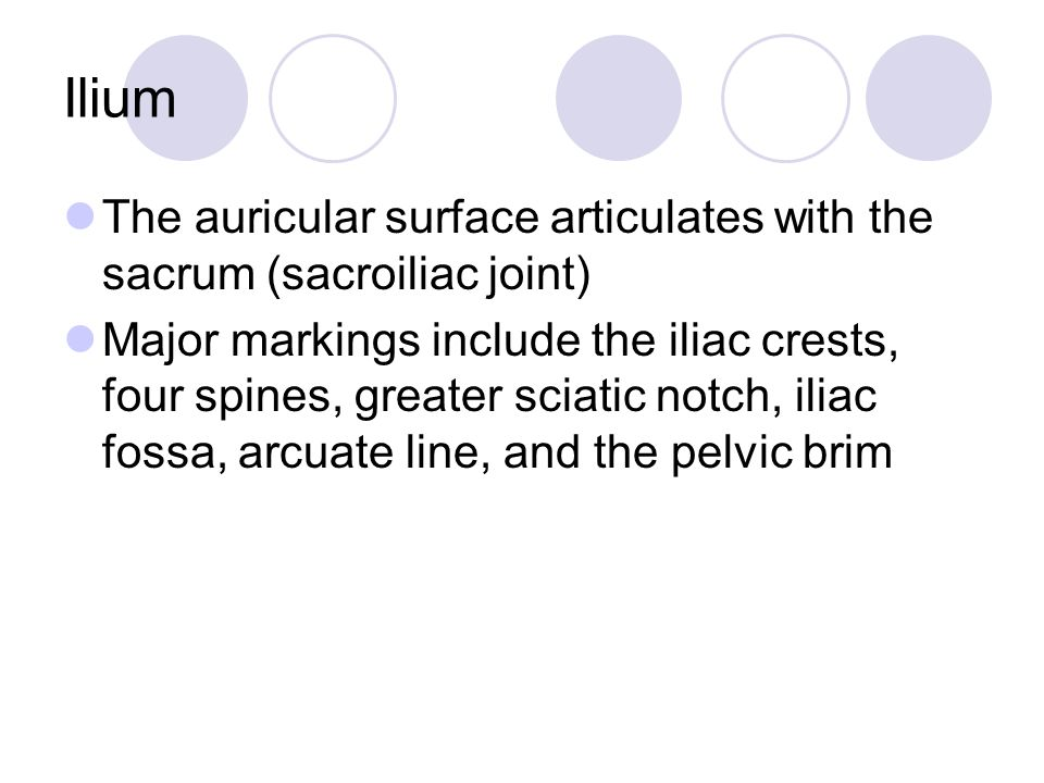 Ilium The auricular surface articulates with the sacrum (sacroiliac joint) Major markings include the iliac crests, four spines, greater sciatic notch, iliac fossa, arcuate line, and the pelvic brim