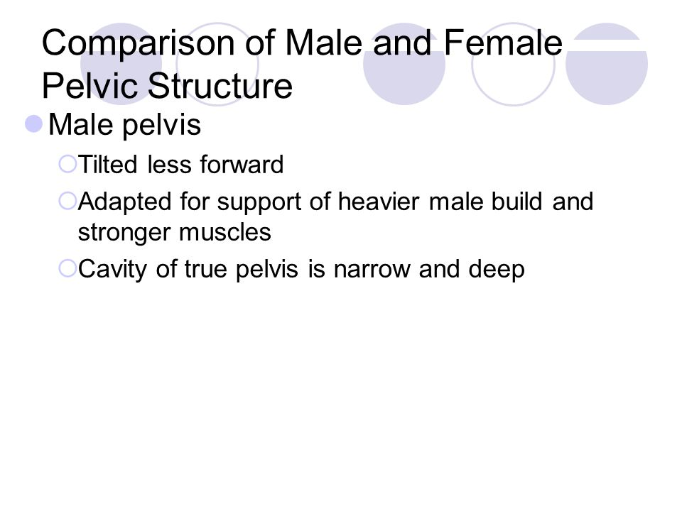 Comparison of Male and Female Pelvic Structure Male pelvis  Tilted less forward  Adapted for support of heavier male build and stronger muscles  Cavity of true pelvis is narrow and deep