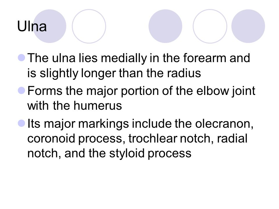 Ulna The ulna lies medially in the forearm and is slightly longer than the radius Forms the major portion of the elbow joint with the humerus Its major markings include the olecranon, coronoid process, trochlear notch, radial notch, and the styloid process